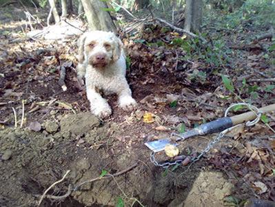 addestramento per cane da tartufo